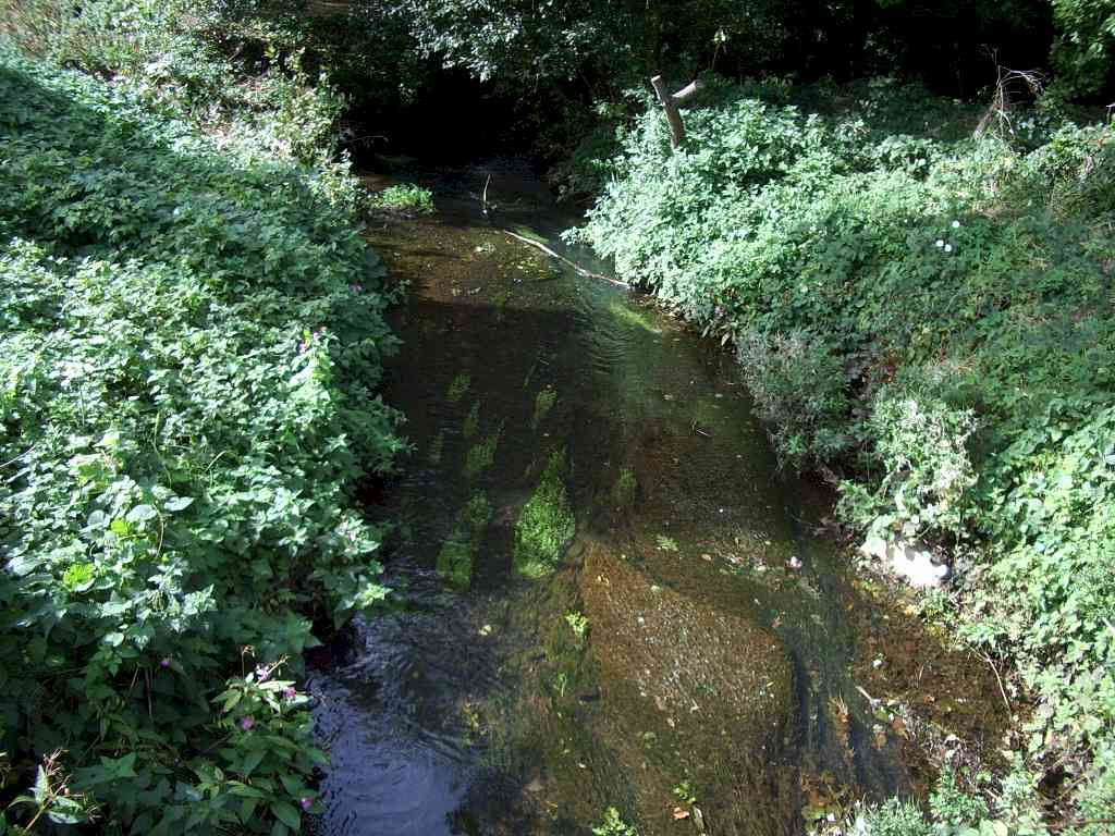 friends of the emm brook